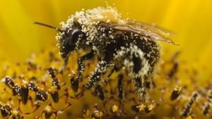 best bee pollen brand